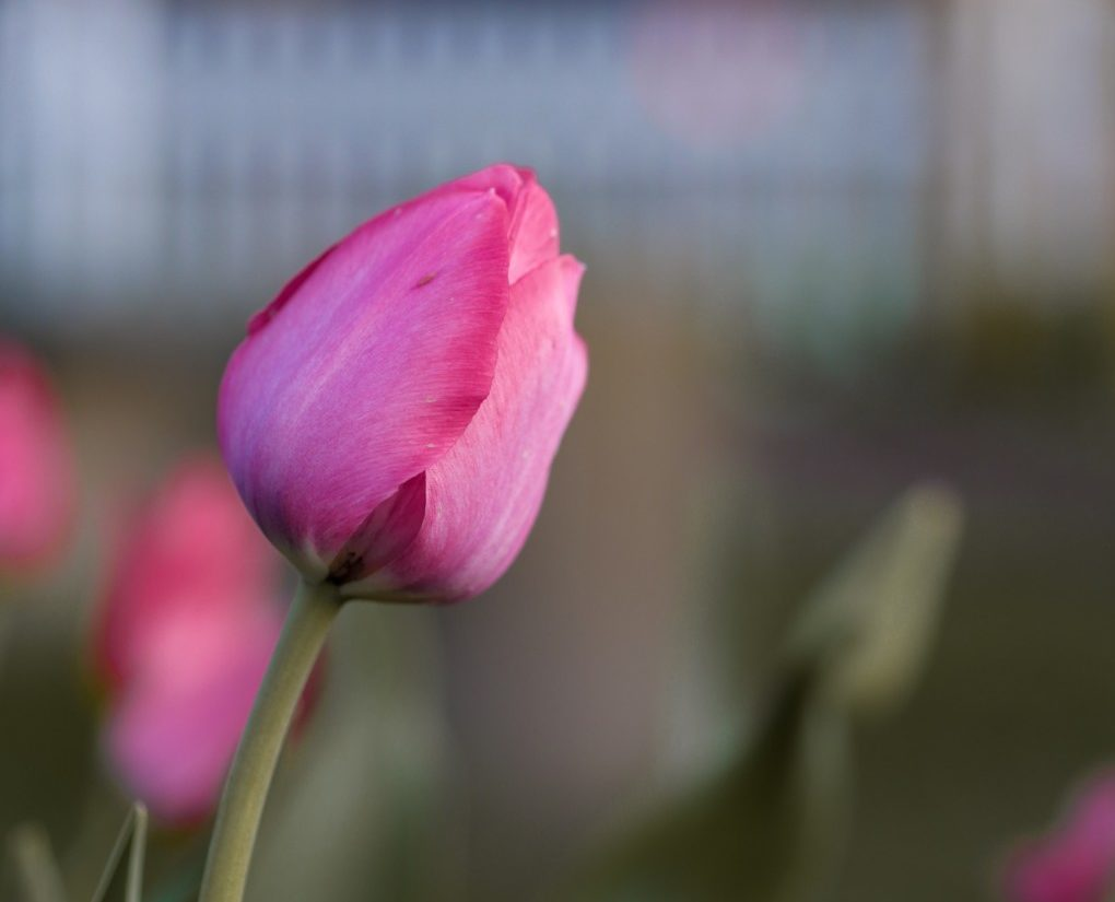 Tulip Mothers Day: Redefining and Embracing Family Traditions Becky Gonzalez Contributor Miami Moms Blog