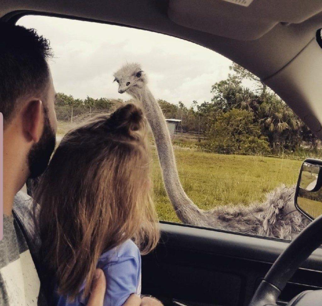 Lion Country Safari Ostrich Ailyn Quesada Contributor Miami Moms Blog