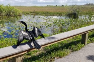 anhinga trail 5 Must-See Campgrounds Under 5 Hours From Miami Ailyn Quesada Contributor Miami Moms Blog