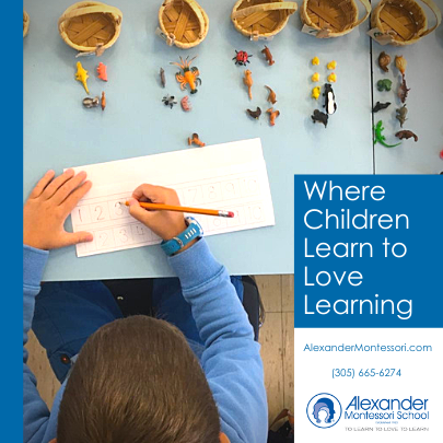 Alexander Montessori School Miami Mom Collective Private Schools Guide