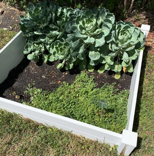 At Home Gardening, a Fun Hobby for You and Yours! Ana-Sofia DuLaney