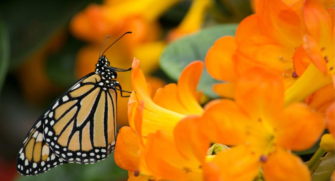 5 tips para plantar un jardín de mariposas en Miami Caro Mejia Contributor Miami Moms Blog