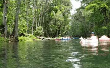 Ichetucknee Springs: Summer Fun at a Hidden Gem {Road Trip Series}