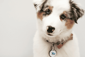 Puppy Survival: Welcoming the New Member of the Family Ailyn Quesada Contributor Miami Moms Blog