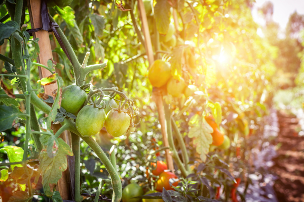 Fall Gardening Guide: Tips and Ideas for Gardening in Miami! Ana-Sofia DuLaney