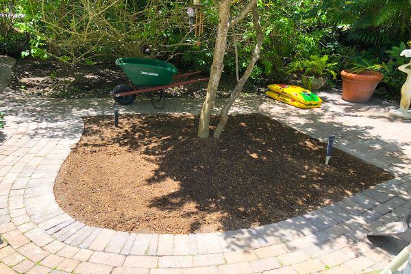Aymee's garden spot (Florida Garden: Start Yours During National Gardening Month Aymee Blanco Contributor Miami Mom Collective)