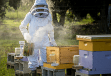 Kristina in her beekeeper suit, tending to her bees (Beekeeping: How the Bees Found Me Kristina Fiorentino Contributor Miami Mom Collective)