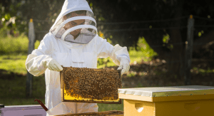 Kristina pulling some honeycomb out of a hive (Beekeeping: How the Bees Found Me Kristina Fiorentino Contributor Miami Mom Collective)