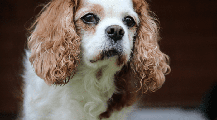 A picture of Monica's dog (Summer Pup Popsicles From a Dietitian's Dog To You Monica Moreno Contributor Miami Mom Collective)