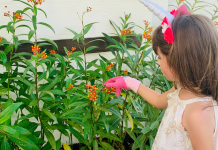 Jessica's daughter tending their butterfly garden (Butterfly Gardening in South Florida Jessica Alvarez-Ducos Contributor Miami Mom Collective)