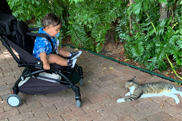 Bella's son watching a six-toed cat (Bella Behar Contributor Miami Mom Collective)