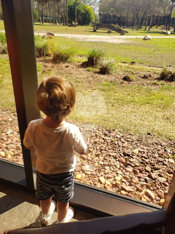 Marcelo enjoying the view of the savannah from the Sanaa restaurant (Sandra Jacquemin Contributor Miami Mom Collective)